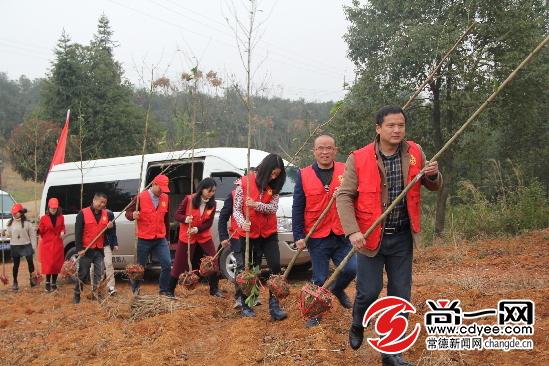 志愿者正在植树. -常德市卫计委志愿服务队开展义务植树活动